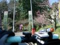 140315月ヶ瀬1(梅園入り口)