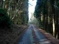 140419この坂の上が鷲峰山林道殻池峠側ピーク。