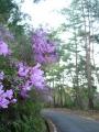 140419金胎寺から犬打峠への下り。道端の木に咲く花