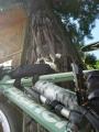 140501杉王神社の大杉2