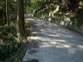 140502大川山から三野へ2、コンクリ舗装の下り