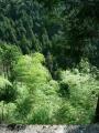 140502大川山から三野へ4.崖下は絶壁