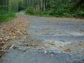 140517蟹満寺からの上り.2、竹の根ででこぼこの道