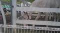 140504京都競馬場5