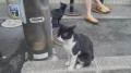 140813大原三千院ファミマの猫