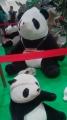 140823今治タオル動物園のパンダ