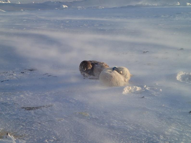 ブログ写真(地吹雪と犬1)