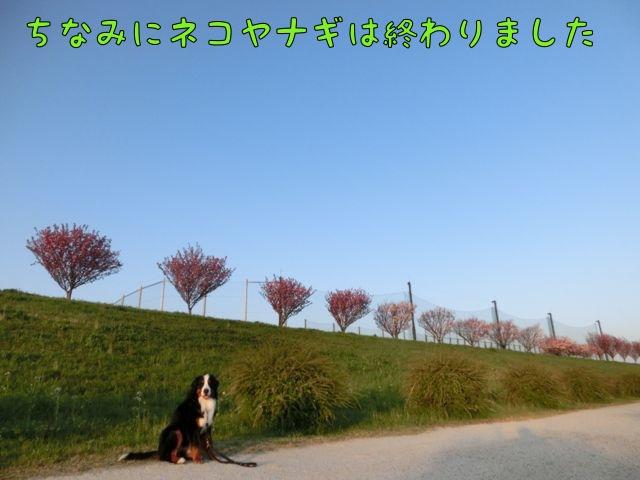 CIMG0109.jpg