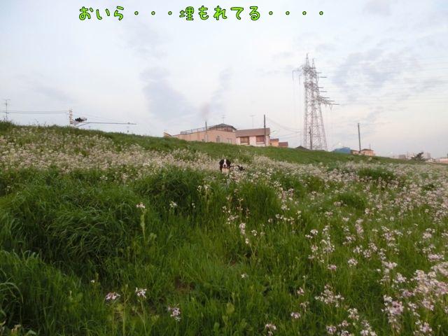 CIMG0169.jpg