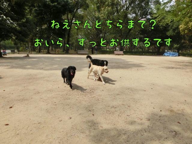 CIMG0257.jpg