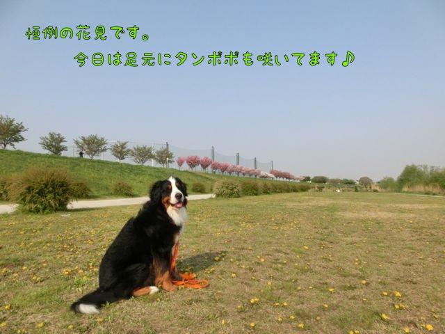 CIMG0436.jpg