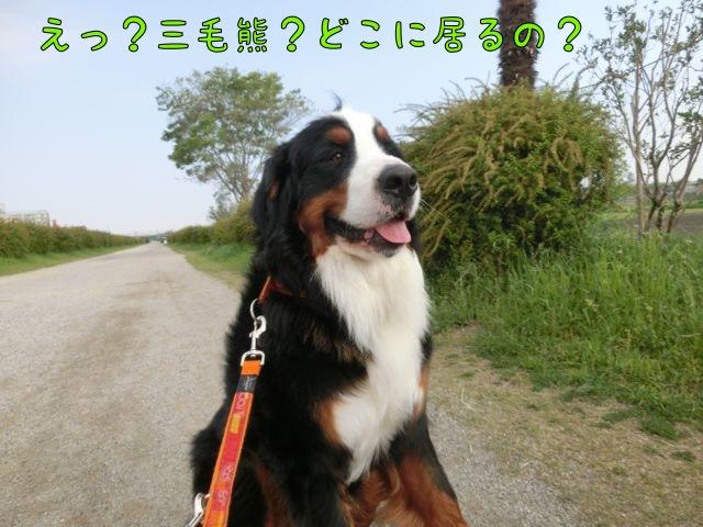 CIMG0665.jpg