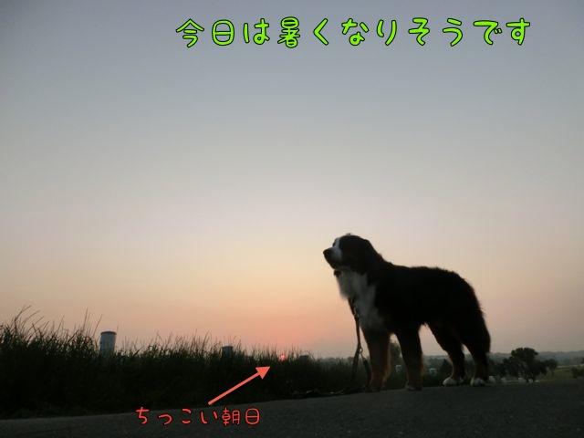 CIMG0674.jpg