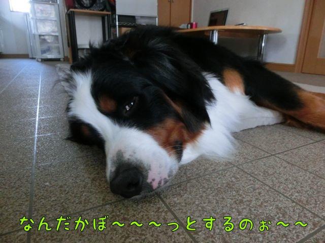 CIMG0709.jpg