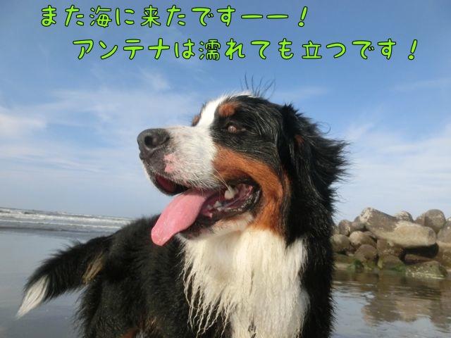 CIMG0870.jpg