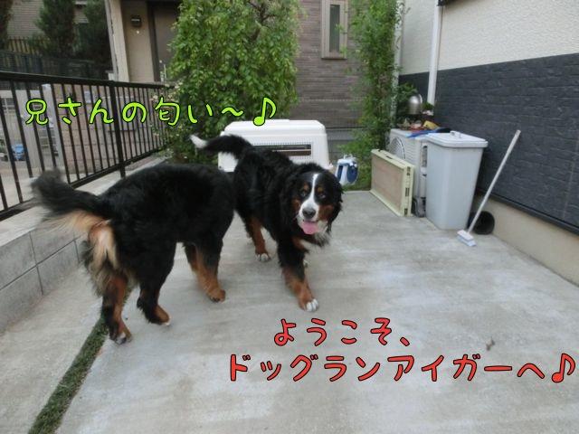 CIMG1444.jpg