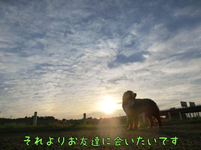 CIMG2027_20140516094938006.jpg