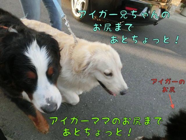 CIMG2182_20140519110105d47.jpg