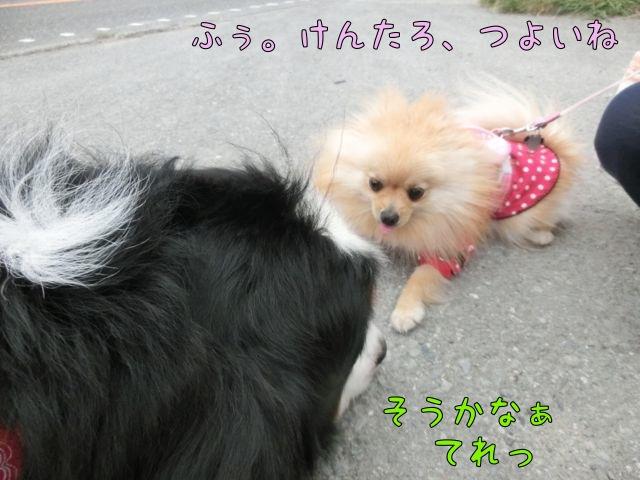 CIMG2264_2014052112201401a.jpg