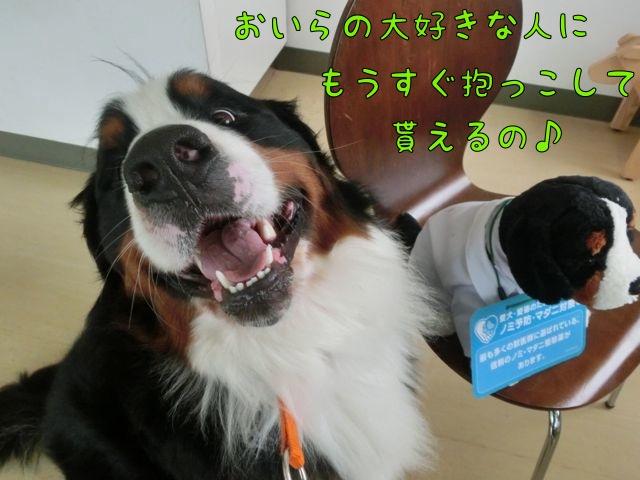 CIMG2701_20140527192953bb5.jpg