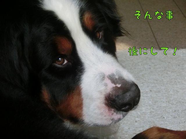 CIMG3240_201406101543353d5.jpg