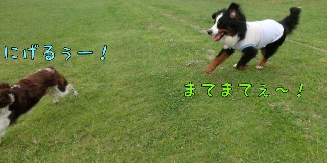 CIMG3261_20140611124054660.jpg