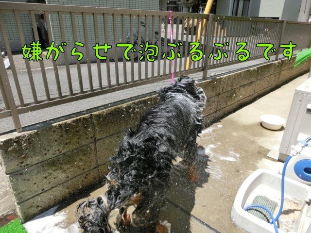 CIMG3429_20140615171419877.jpg