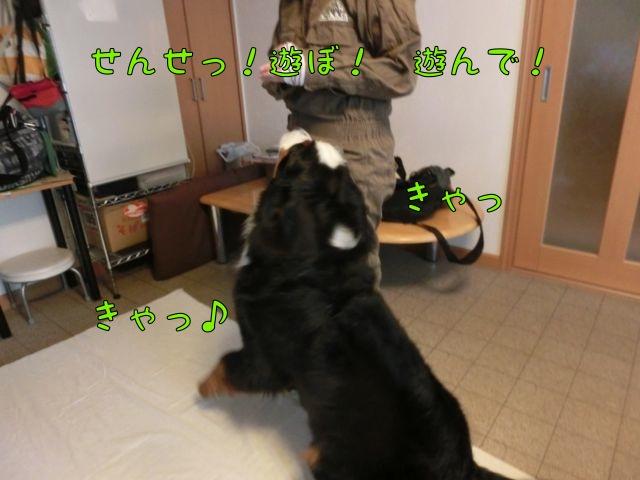 CIMG4106.jpg