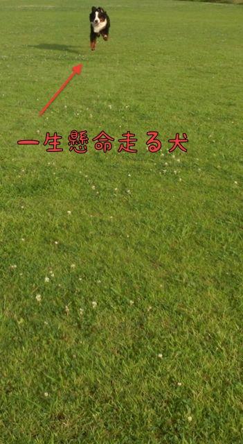 CIMG4194.jpg