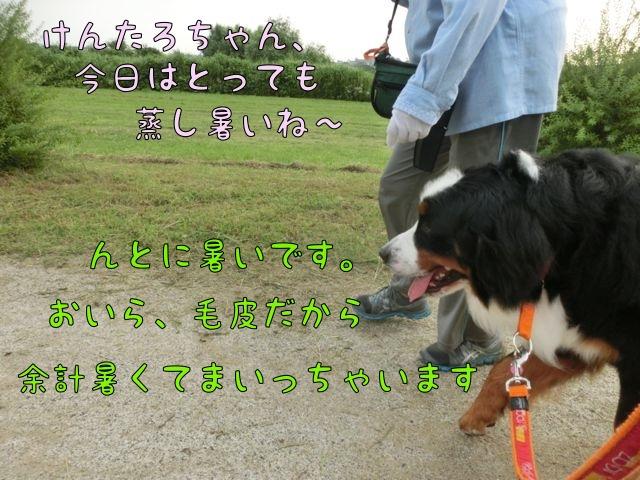 CIMG4307_20140702114430642.jpg