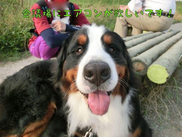 CIMG4316_2014070211443332f.jpg