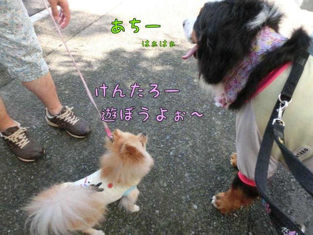 CIMG4690_201407121110522cc.jpg