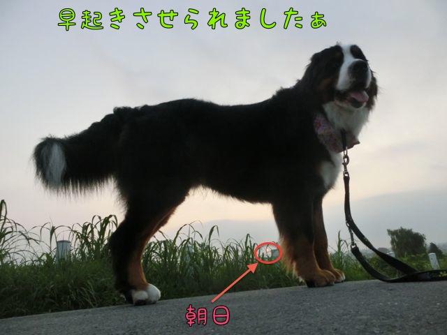 CIMG4801_2014071610531808c.jpg