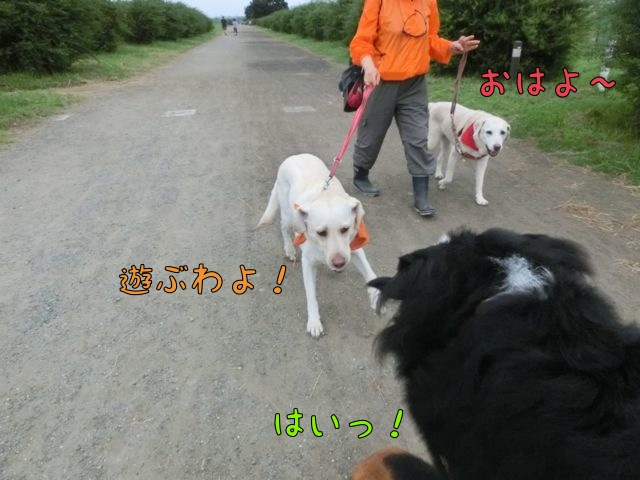 CIMG4937_2014072014415937a.jpg