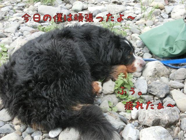 CIMG4978.jpg