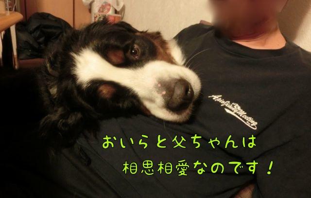 CIMG4987.jpg