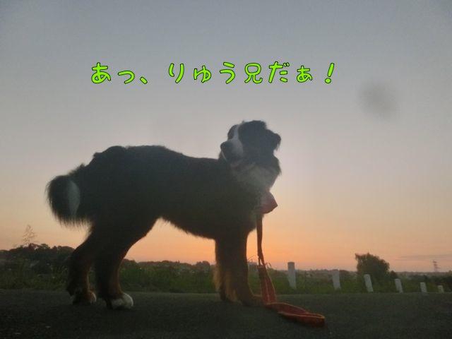 CIMG5293_20140803080828675.jpg