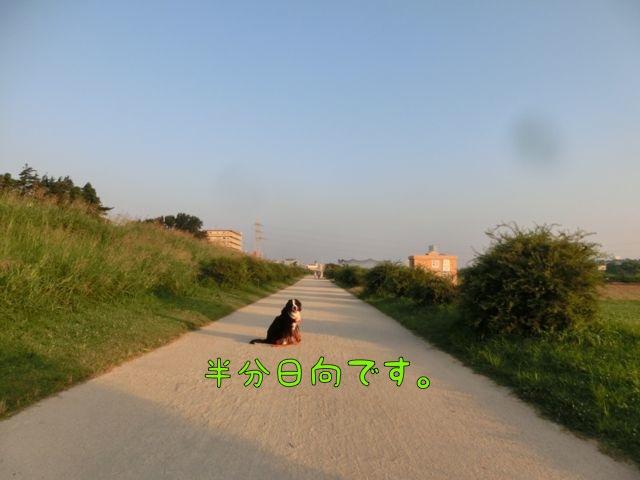 CIMG5305_201408030816230b2.jpg