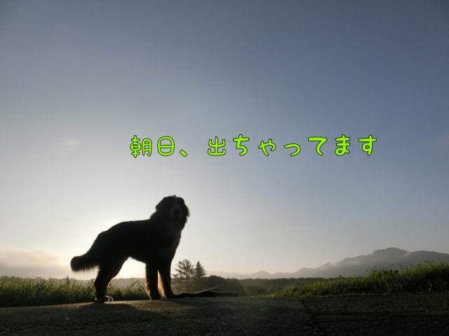 CIMG5641_2014081512270542c.jpg