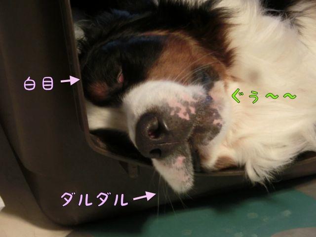 CIMG5821.jpg