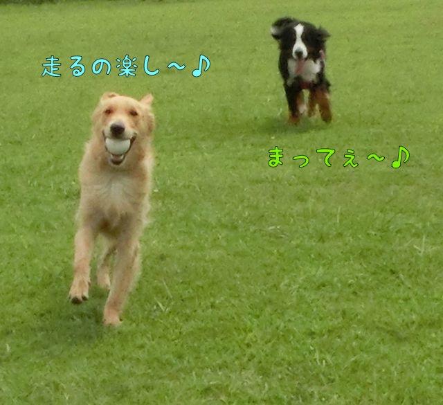 CIMG6344.jpg