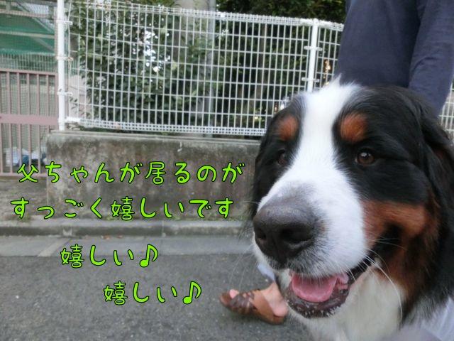 CIMG6394_20140902020624abe.jpg