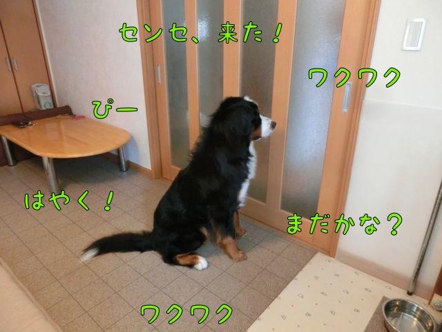 CIMG6732_20140912155700db9.jpg