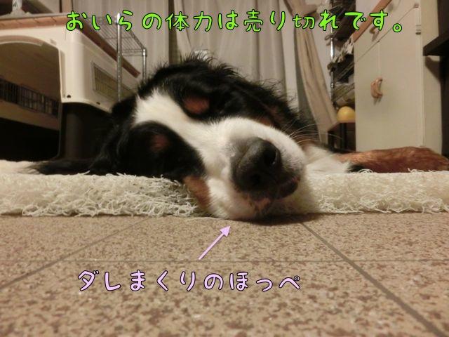 CIMG7090.jpg