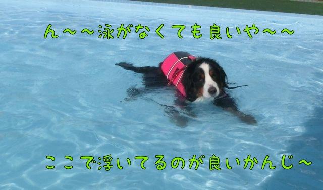 CIMG7185_20140917211531d77.jpg