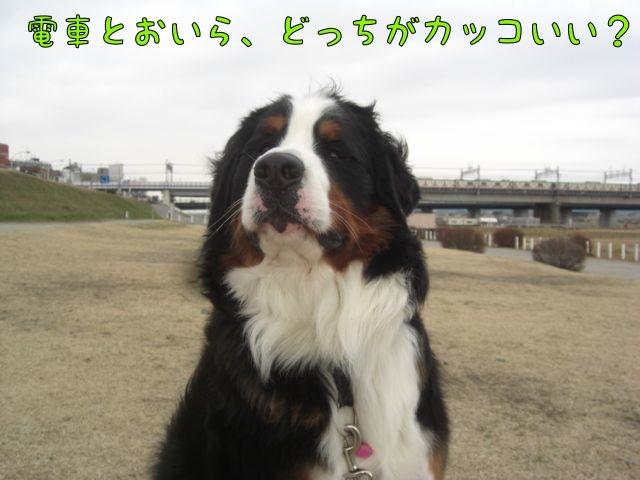 CIMG7855.jpg