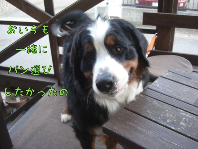 CIMG7928.jpg