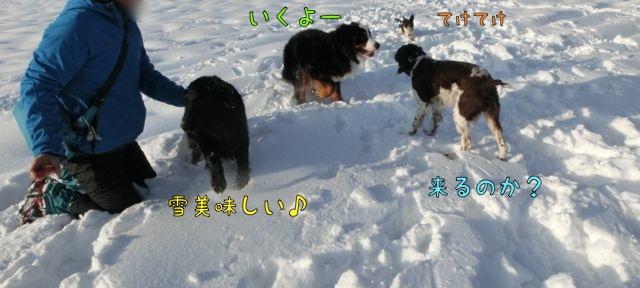 CIMG8396.jpg