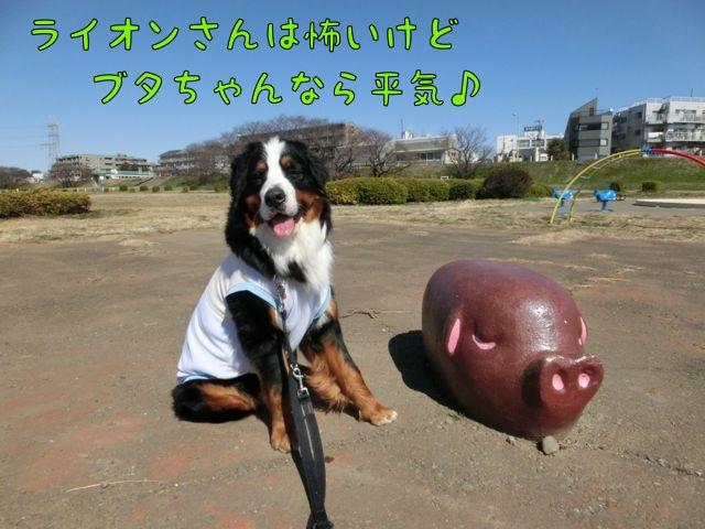 CIMG8462.jpg