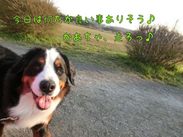 CIMG8802.jpg